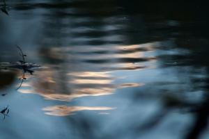 nuvole riflesse nell'acqua al tramonto in colore dorato e acqua blu con piante