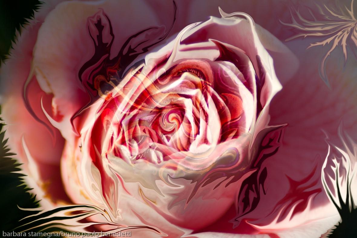 immagine astratta con vortice centrale a forma di bocciolo di rosa di colore rosa dominante e forme fluide fluttuanti che richiamano forme della natura