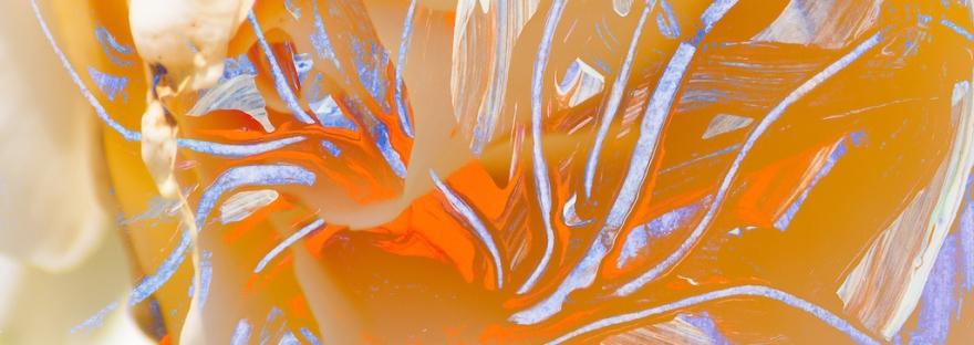 immagine astratta dai colori caldi con forma simile a fiore con pistilli con forme astratte